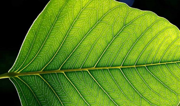 Fotosentez nedir? nasıl gerçekleşir?