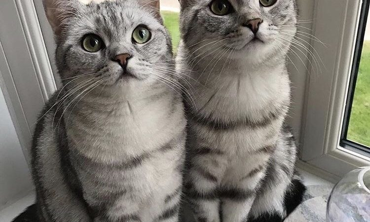 Kediler Nasıl Beslenir? Kedilerin Bakımı Nasıldır?